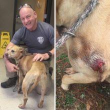 SHOT DOG IN FLORIDA