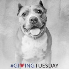 GIVING TUESDAY!!!