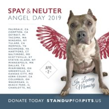 Spay & Neuter ANGEL Day 2019 cities announced!!!!