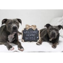 BETSY HAS BEEN ADOPTED!!!!